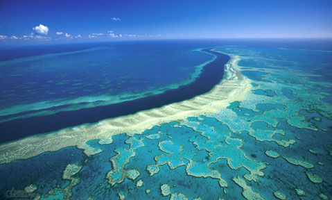 Fraser's Great Barier Reef yacht charters explore the most spectacular wildlife in the world