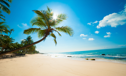 A Caribbean yacht charter is the ideal way to discover new destinations such as this white sand palm-fringed beach