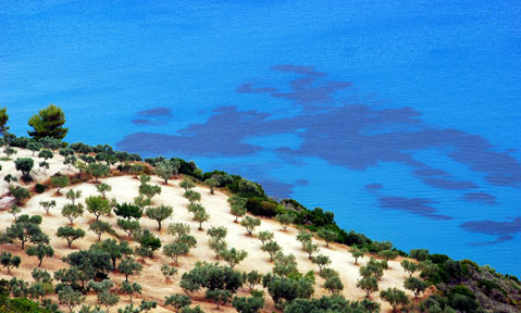 Sparse vegetation overlooks the bright blue sea during a Corsica yacht charter