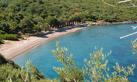 A Datça yacht charter sails to a deserted beach lined with trees
