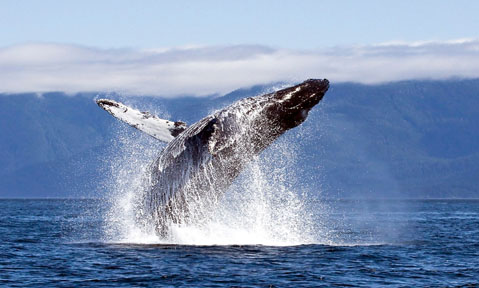 An adventurous Antarctica yacht charter discovers a whale jumping out of the water