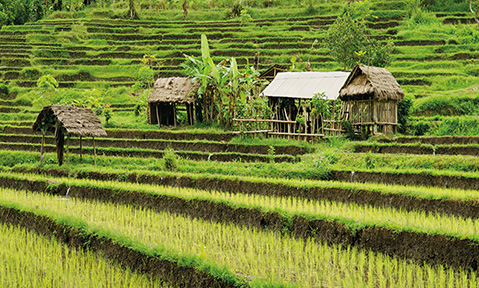 Ricefields and wooden huts seen from a Bali yacht charter
